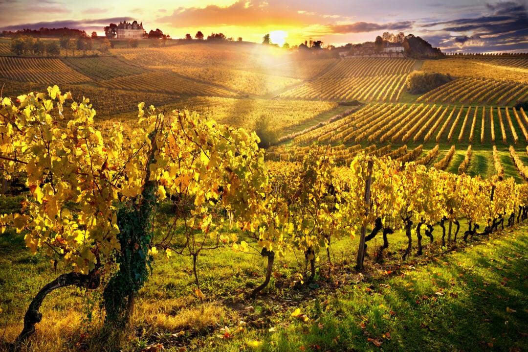 Sunlight and vineyards