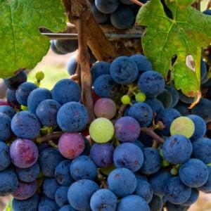 wine tasting tips tannins in wine
